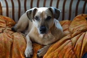 Der Hund auf der Couch
